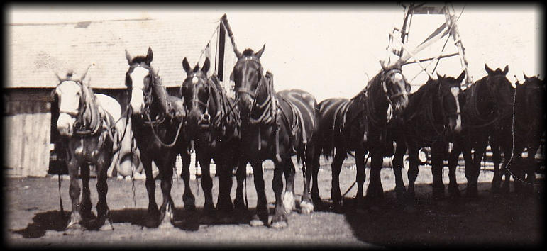Grandfather's 8-horse Team